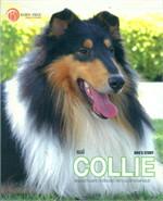 คอลลี่ Dog's Story