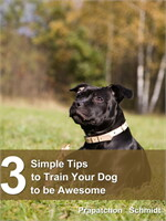 3 Simple Tips to Train Your Dog to be Aw