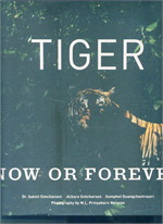 Tiger Now or Forever