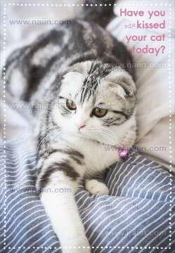 สมุดโน้ตทูนหัวฯ 2 Have you kissed your cat today?