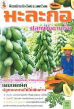 พืชสร้างเงินในประเทศไทย มะละกอ ปลูกง่ายฯ
