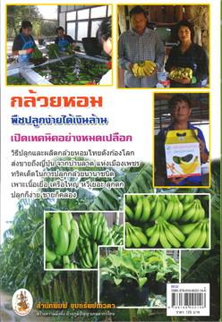 เคล็ดลับวิธีปลูกและผลิตกล้วยหอมฯ