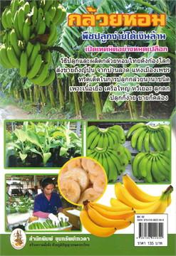 เคล็ดลับวิธีปลูกและผลิต กล้วยหอมและสารพัดกล้วย พืชปลูกง่าย ได้เงินล้าน