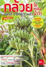 กล้วยไข่ กล้วยหอม กล้วยน้ำว้า ปลูกได้ ขายง่าย รวยเร็ว