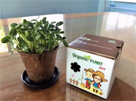 ชุดปลูกผัก Organic DIY ต้นอ่อนทานตะวัน