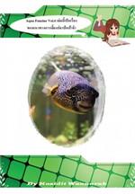 Aqua Fanzine Vol.6